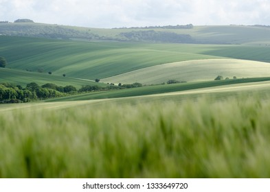 The rolling hills of Sussex, England in Spring with long grass leading to freshly planted fields.