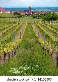 Rolling hills of vineyards in Alsace, France