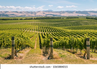 rolling hills with vineyards in Marlborough region, South Island, New Zealand