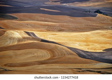 Rolling hills of wheat in the autumn and fall in the Palouse region of Washington State