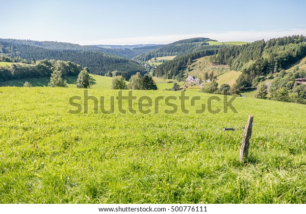 Rolling landscape with meadows and pine trees in Schmallenberg, Germany.