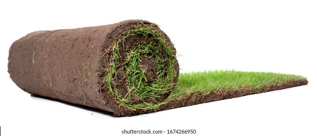 Rolling Lawn Turf Panorama isolated on white Background