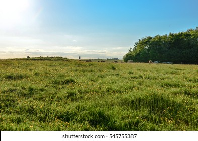 Rolling pastures of the English countryside in summer with cows in the horizon against a beautiful blue sky