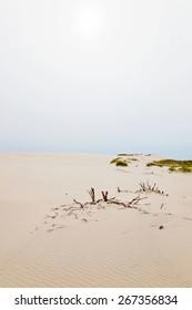 Rolling sand dune landscape
