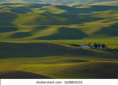 Rolling wheat fields in springtime in the Palouse area of Washington state