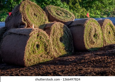 Rolls of fresh sod grass ready for commercial landscape installation. Large rolls of sod on construction site.