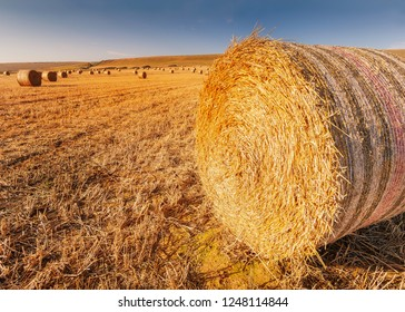Rolls of hay bales in a field. One large roll in the foreground. He field is dry and a low golden sun is catching them taken with a wide angle lens