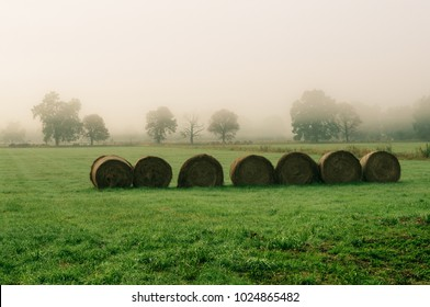 Rolls of hay in a field. On the horizon, the trees in the mist
