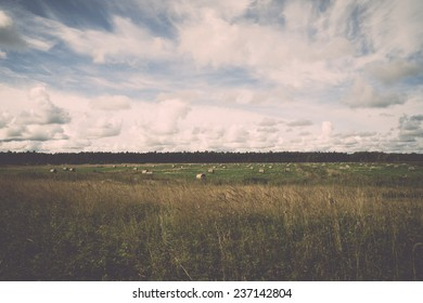 rolls of hay in green field in country - retro, vintage style look