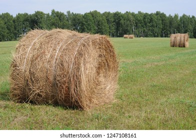 Rolls of hay on field