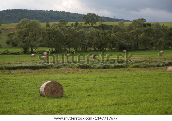 The rolls of hay on green field, european countryside, fresh grass, forest, summer time.