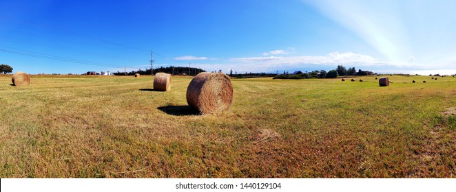 Rolls of Hay On Rural Whidbey Island