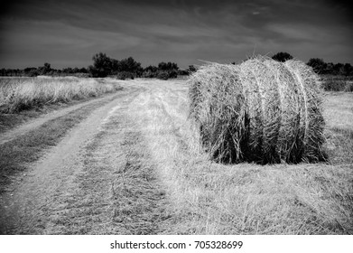 Rolls of haystacks on the field. Summer farm scenery with haystack. Agriculture