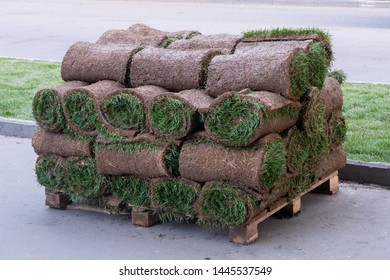 Rolls of natural lawn with the ground stacked on pallets in a stack. Horizontal photo format
