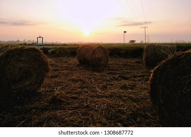 Rolls of paddy straw with golden sunrise background. The paddy straws are made into rolls and recycled for various usage as side product of paddy field.