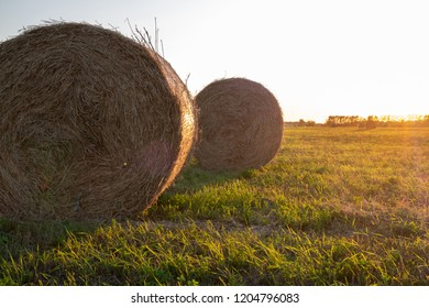 rolls of pressed hay for cattle feed on the field under the evening sun