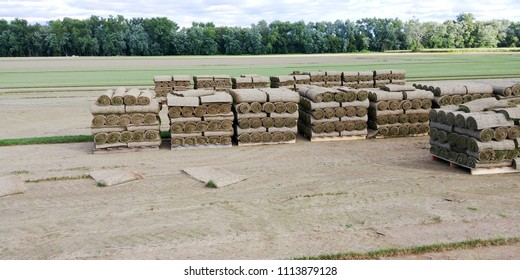 Rolls of sod just cut and rolled at the farm stacked on pallettes ready for transport