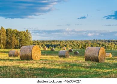 Rolls of straw. Kaluga region, Russia