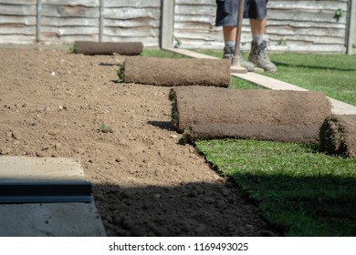 Rolls of turf or grass ready to be laid out in the garden