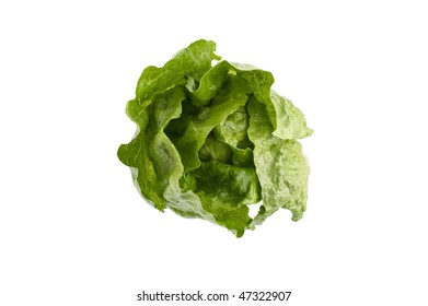 Romaine lettuce on white background