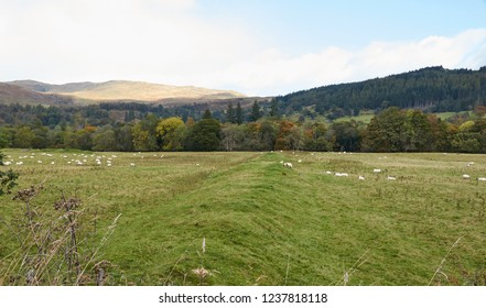Roman Earthworks, near Callander in Perthshire.