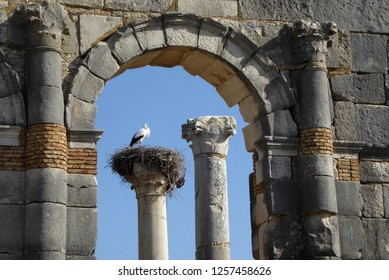 Roman ruins of Volubilis in Northern Morocco