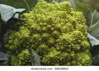 romanesco broccoli with logarithmic spirals with fibonacci number