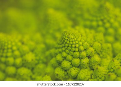 Romanesque cauliflower logarithmic spirals close up