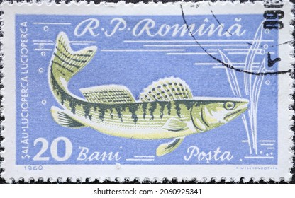 Romania - Circa 1960: a postage stamp printed in the Romania showing a pikeperch (Lucioperca lucioperca)