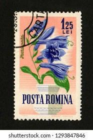 ROMANIA - CIRCA 1964: A postage stamp printed in Romania shows a blooming hosta (Hosta ovata).