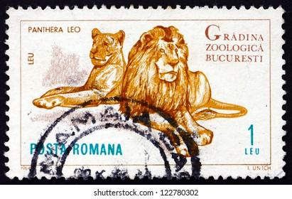 ROMANIA - CIRCA 1964: a stamp printed in the Romania shows Lions, Panthera Leo, Animal, Bucharest Zoo, circa 1964