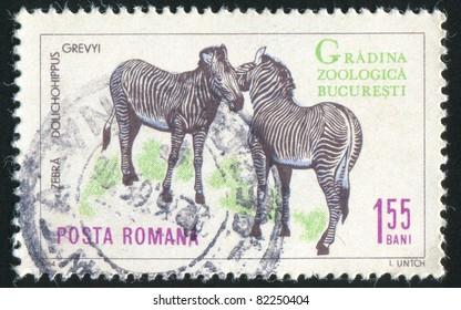 ROMANIA - CIRCA 1964: A stamp printed by Romania, shows zebra, circa 1964.