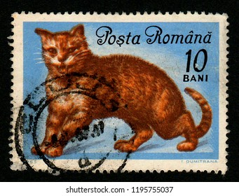 ROMANIA - CIRCA 1965: A postage stamp printed in Romania shows a ginger tomcat on blue background.