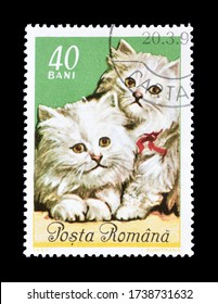 ROMANIA - CIRCA 1995 : Cancelled postage stamp printed by Romania, that shows Cats, circa 1995.