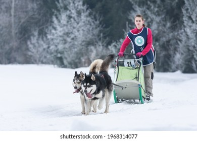 Tușnad, Romania - February 02 2019: Unidentified woman participating in the Free Dog Sled Racing Contest