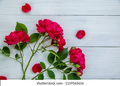Romantic background with red rose on white wood table, top view.