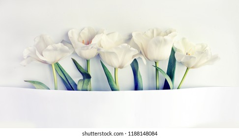 romantic background with tulips  top veiw with copy spase