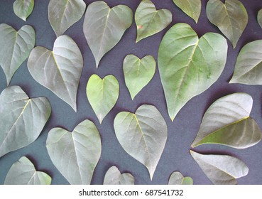 romantic background-abstract photograph of a leaves in heart shapes different sizes and shades