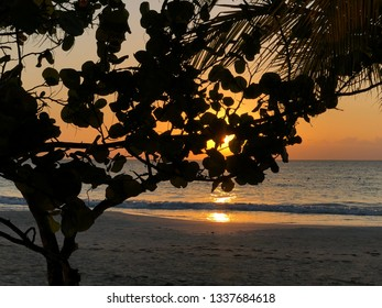 Romantic beach sunrise through the tree with water and horizon on background
