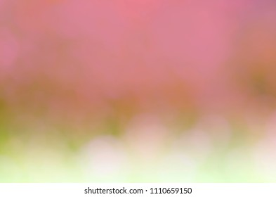 Romantic bokeh lights pink color abstract backgrounds