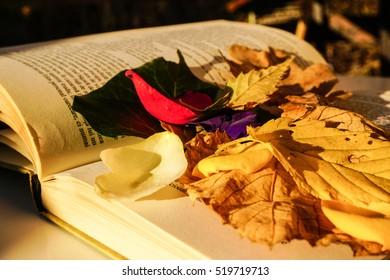 romantic book reading