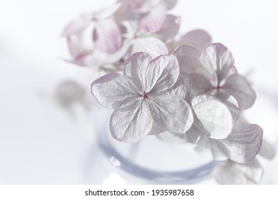 Romantic bouquet of dried flowers close-up. Small depth of field for a dreamy feel. Pale lilac hydrangea flower (Hydrangea macrophylla) in a glass vase