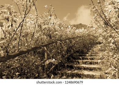 Romantic and bucolic landscape with stair, sepia and antique-style image