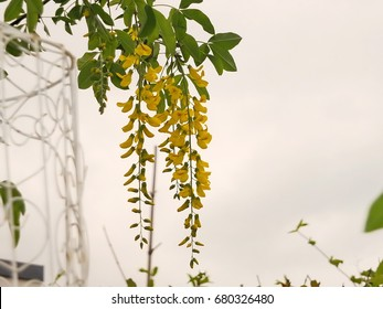 Romantic bunch of yellow flowers with white background