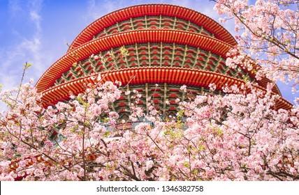 Romantic cherry blossom season in the ancient temple