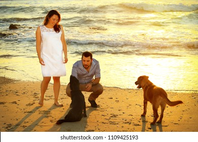 Romantic couple walk their two dogs at the beach