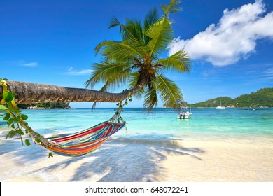 Romantic cozy hammock in the shadow of coconut palm tree at tropical paradise ocean beach in bright sunny summer day - vacation background