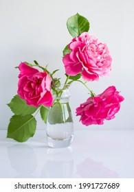 romantisch-delikater Bouquet mit rosafarbenen Gartenrosen auf weißem Hintergrund