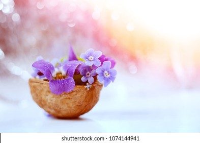 Romantic floristic composition with violets and forget-me-not flowers in a nutshell against beautiful bokeh background.