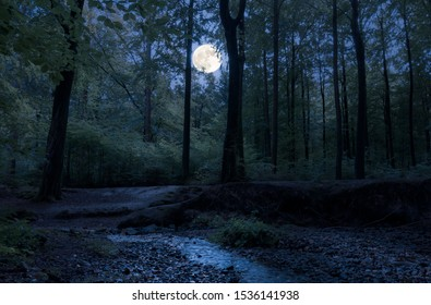 In a romantic forest in the middle of Germany, the full moon shines through the trees at night on a babbling brook.